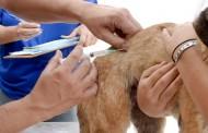 Vacinação contra Raiva Animal, continua sábado (06)