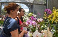 Prefeitura recebe até segunda-feira inscrições de produtores para participar da 6ª Mostra de Orquídeas