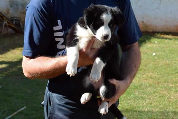 Canil da Guarda Municipal de Sumaré recebe dois novos cachorros