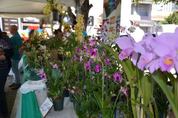 Sumaré 150 anos: Expo Orquídea começa nesta sexta-feira, dia 20